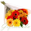 10 Fresh Mix Color Gerbera Daisy Bunch
